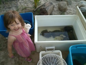 Maya meets sea turtles in Sayulita, Thanksgiving 2014